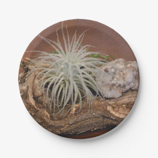 Air plant Tectorum Paper Plate