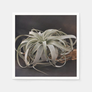 Air Plant Xerographica Disposable Napkin
