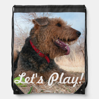 Airedale playing ball in dried grasses rucksacks