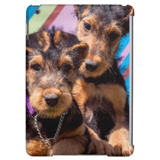 Airedale puppies in a green bucket