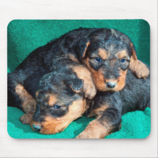 Airedale puppies lying on towel mouse pad