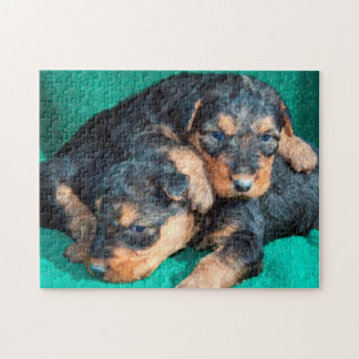 Airedale puppies lying on towel puzzle