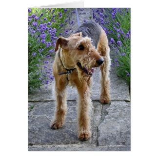 Airedale Terrier Blank Greeting Card