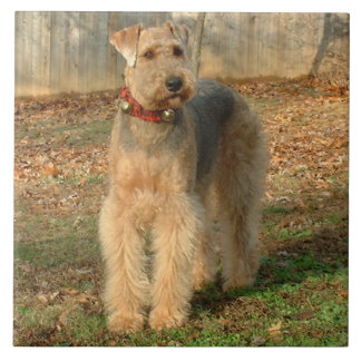 Airedale Terrier Dog Photo Tile