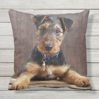Airedale terrier puppy cushion