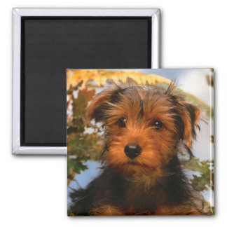 Airedale Terrier Puppy Dog Magnet