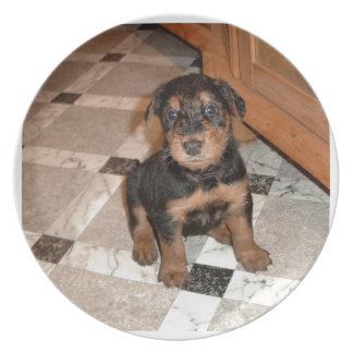 Airedale Terrier Puppy Plate