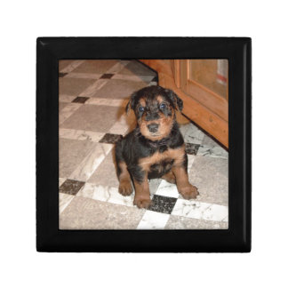 Airedale Terrier Puppy Small Square Gift Box