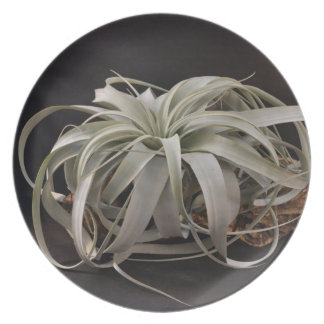 Airplant Xerographica Dinner Plates