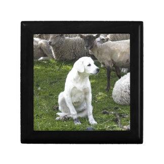 Akbash Dog and Sheep Herd Gift Box