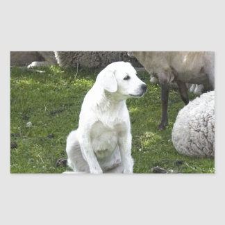 Akbash Dog and Sheep Herd Rectangular Sticker