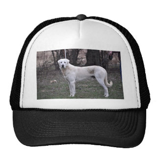 Akbash Dog Cap
