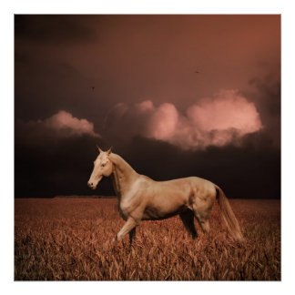 Akhal-teke horse on sunset poster