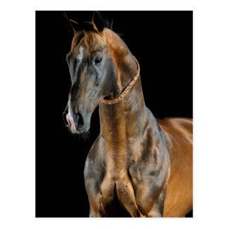 Akhal-Teke Horse Postcard