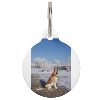 akita in snow pet name tag