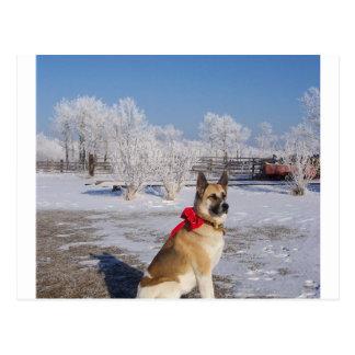 akita in snow.png postcard