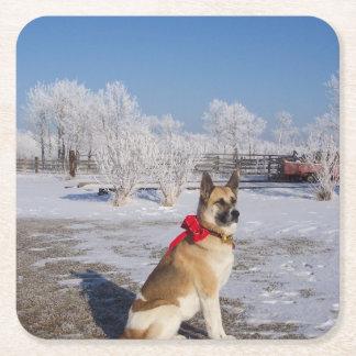 akita in snow square paper coaster