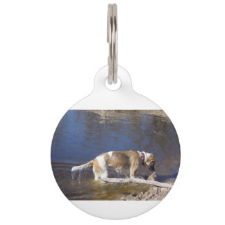 akita in water pet tag