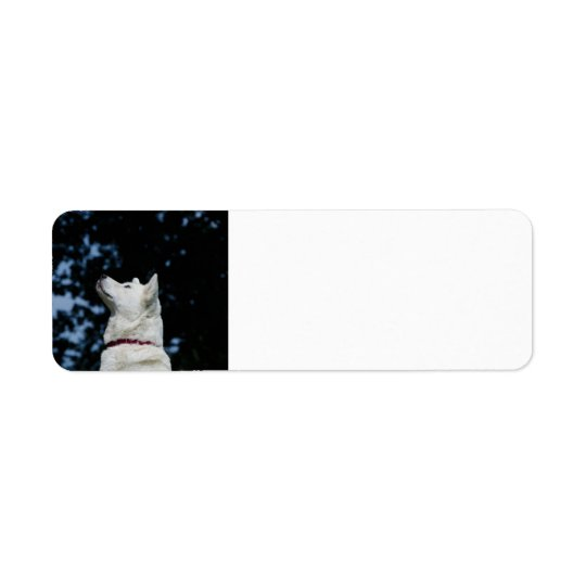 akita-inu-5.png return address label