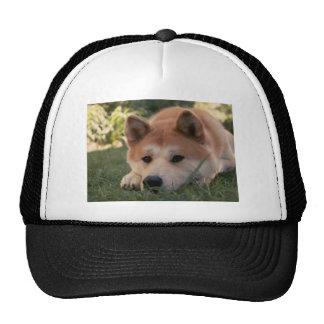 Akita Inu Dog Deep Thoughts Cap