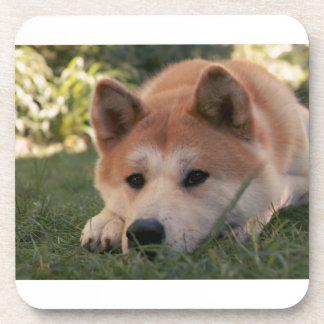 Akita Inu Dog Deep Thoughts Coaster