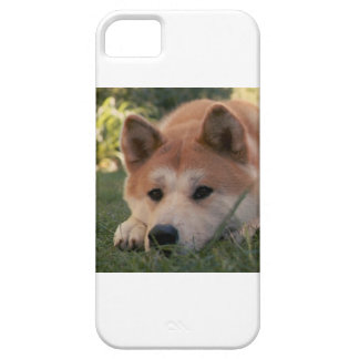 Akita Inu Dog Deep Thoughts iPhone 5 Cases