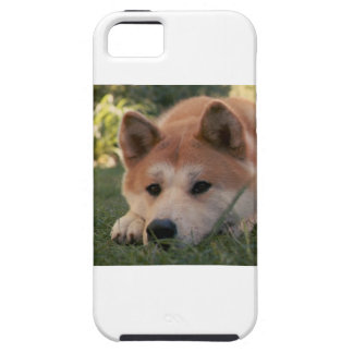 Akita Inu Dog Deep Thoughts iPhone 5 Covers