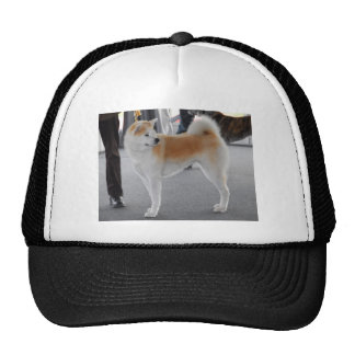 Akita Inu Dog In A Dog Show Cap