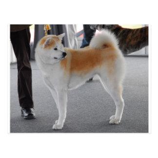 Akita Inu Dog In A Dog Show Postcard