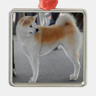 Akita Inu Dog In A Dog Show Silver-Colored Square Decoration