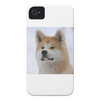 Akita Inu Dog Looking Serious iPhone 4 Case-Mate Cases