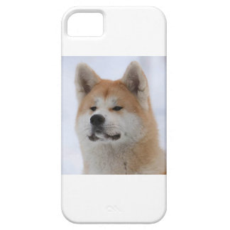 Akita Inu Dog Looking Serious iPhone 5 Cases