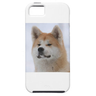 Akita Inu Dog Looking Serious iPhone 5 Covers