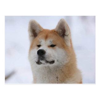 Akita Inu Dog Looking Serious Postcard