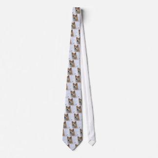 Akita Inu Dog Looking Serious Tie