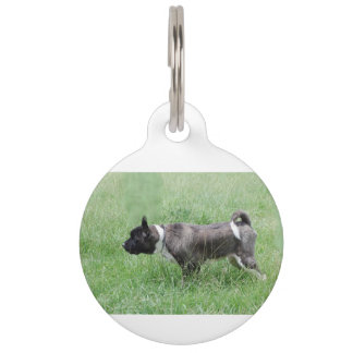 akita pointing pet ID tag