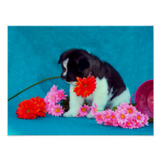 Akita puppy with flowers poster