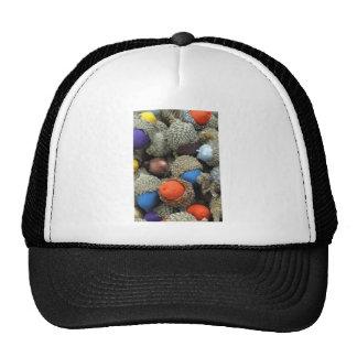 Akorns 1.JPG Hats