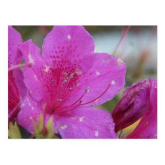 Alabama Flowers Postcards