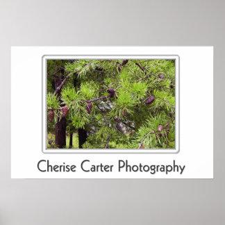 Alabama Long Needle Pine Poster