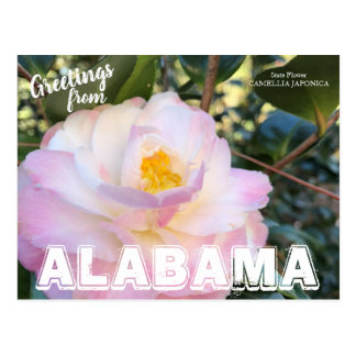 Alabama State Flower, Camellia Postcard