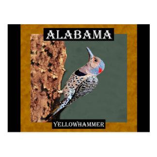 Alabama Yellowhammer Postcard
