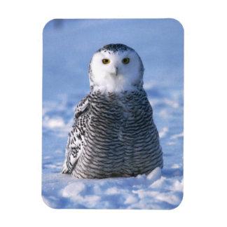 Alaska Arctic Winter Snowy Owl Designed Rectangular Photo Magnet