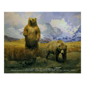 Alaska Brown Bear Poster