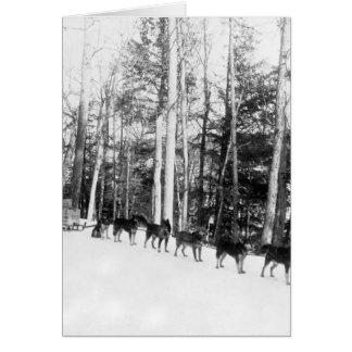 Alaska Dog Sledding Greeting Card