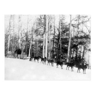 Alaska Dog Sledding Postcard