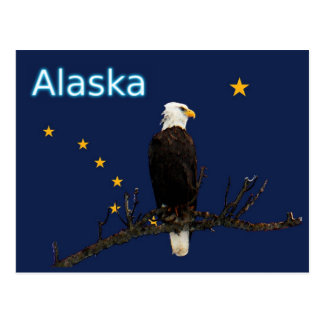 Alaska Eagle And Flag Postcard