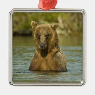 Alaska. Katmai NP. Coastal Brown Bear fishing Metal Ornament