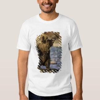 Alaska, USA, Grizzly Bear, Ursus arctos, cub Tshirts
