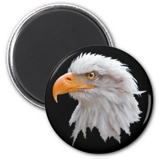 Alaskan Bald Eagle Magnet